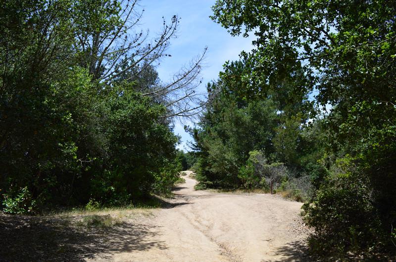 Redwood Regional Park15