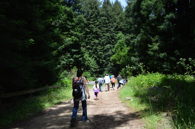 Redwood Regional Park2
