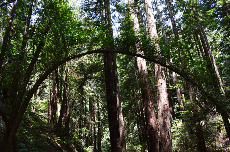 Redwood Regional Park3