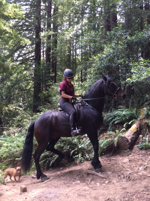 Redwood Regional Park8