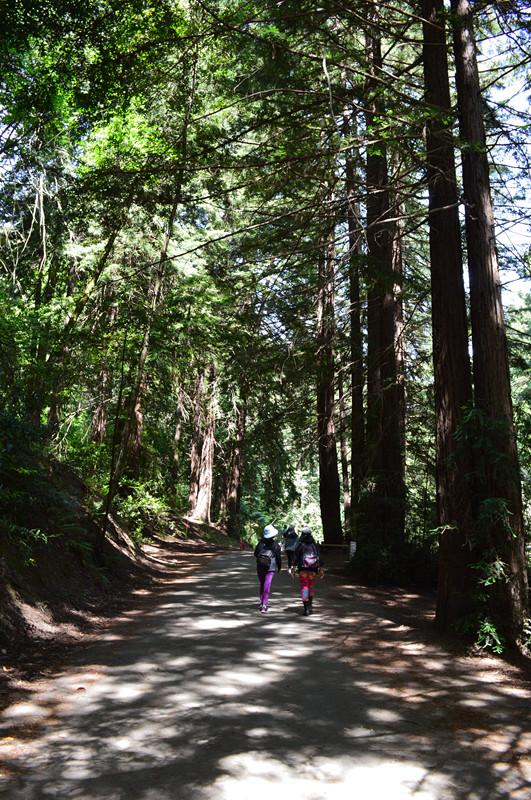 redwood regional park1
