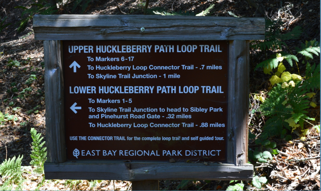 huckleberry path loop1