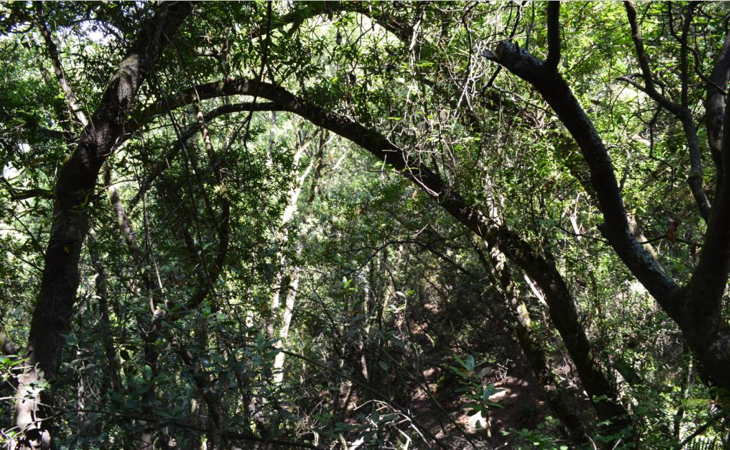 huckleberry path loop3