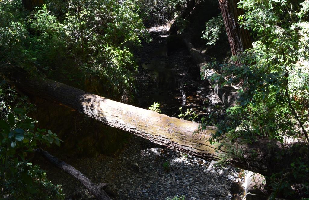 portola redwoords state park4