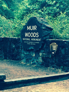 Muir Woods National Monument1