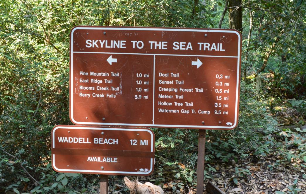 big basin state park5