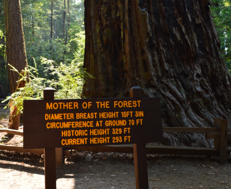 big basin state park_mother of the forest