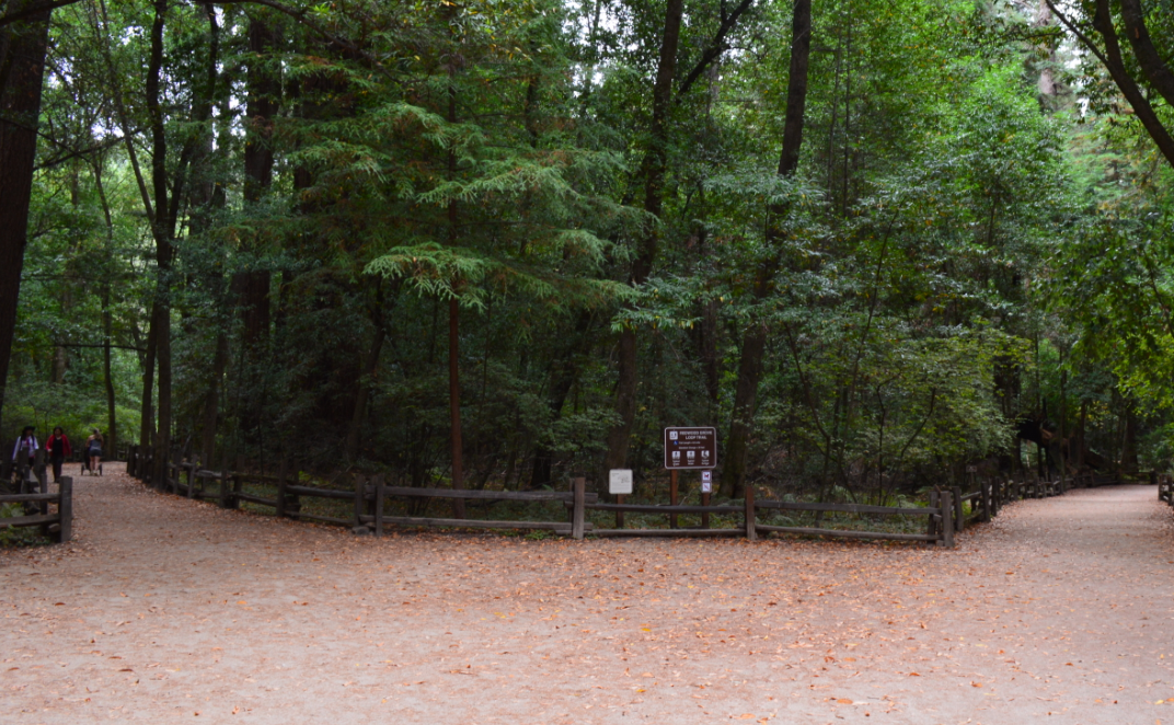 henry cowell redwoods state park_redwood grove loop trail_entrance
