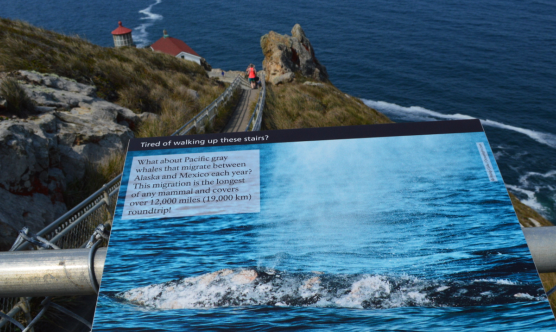point reyes lighthouse_gray whales