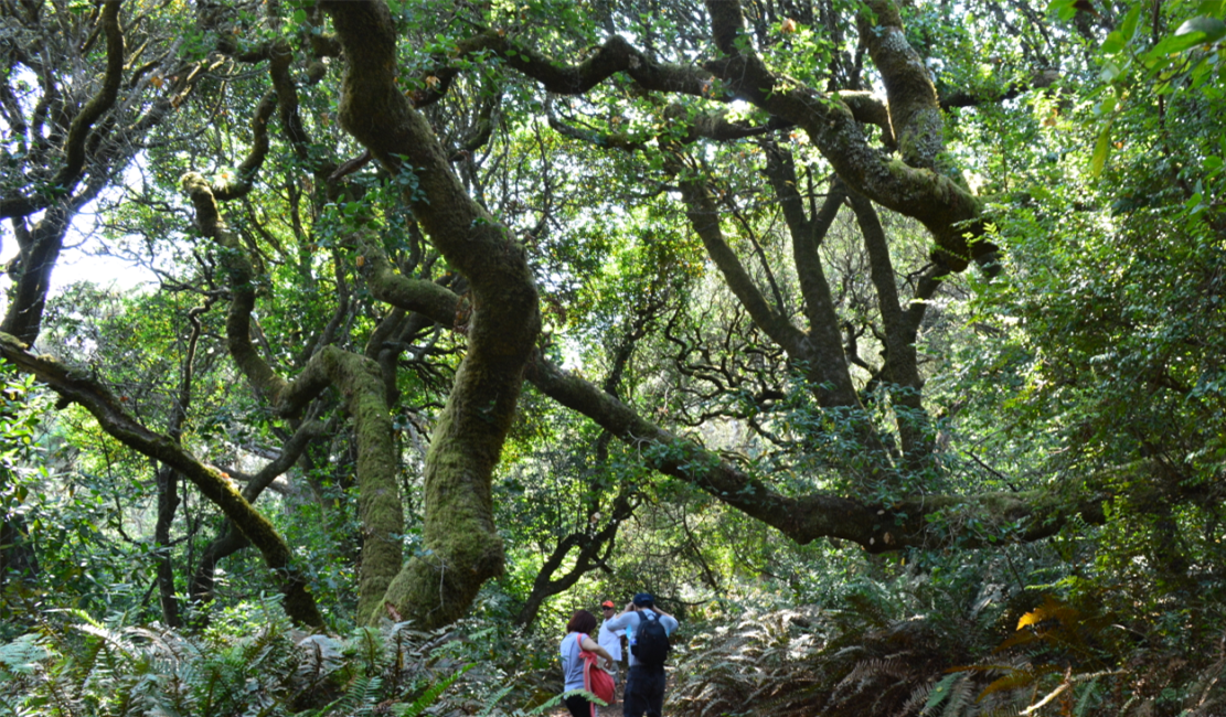 tomales bay state park_jepson trail_trees