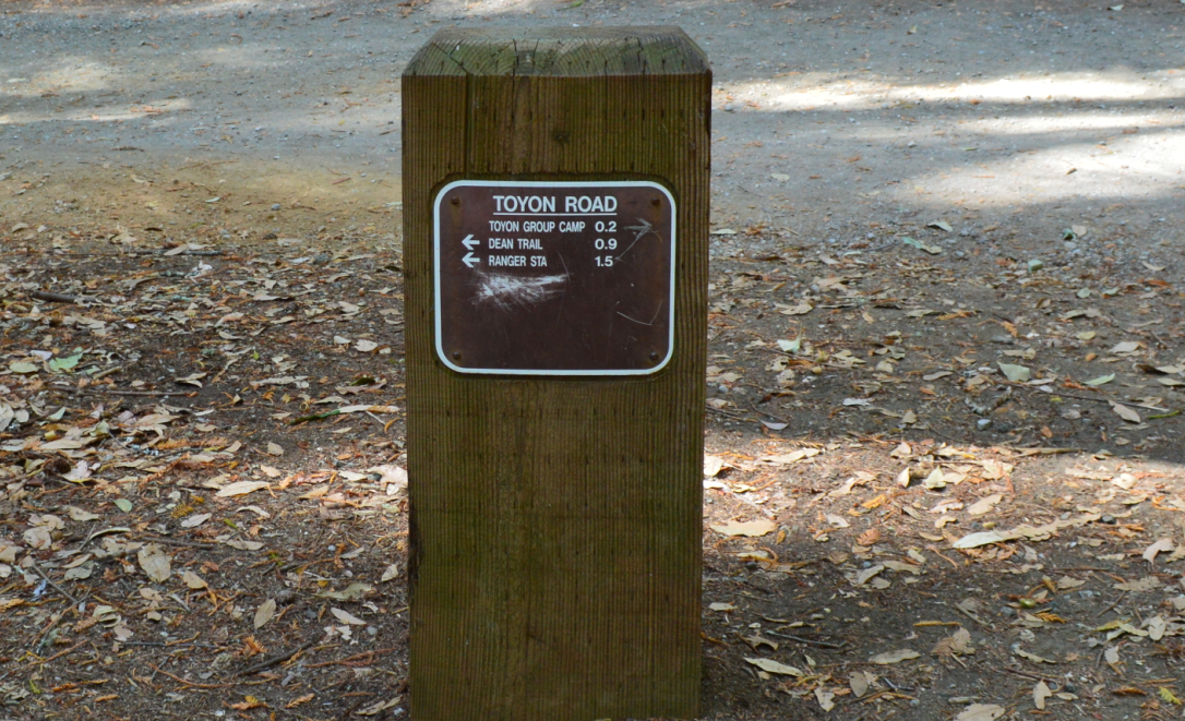 huddart county park12
