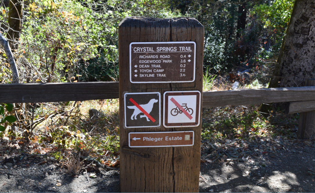 huddart county park3