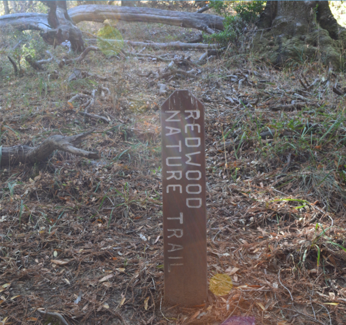 huddart county park31