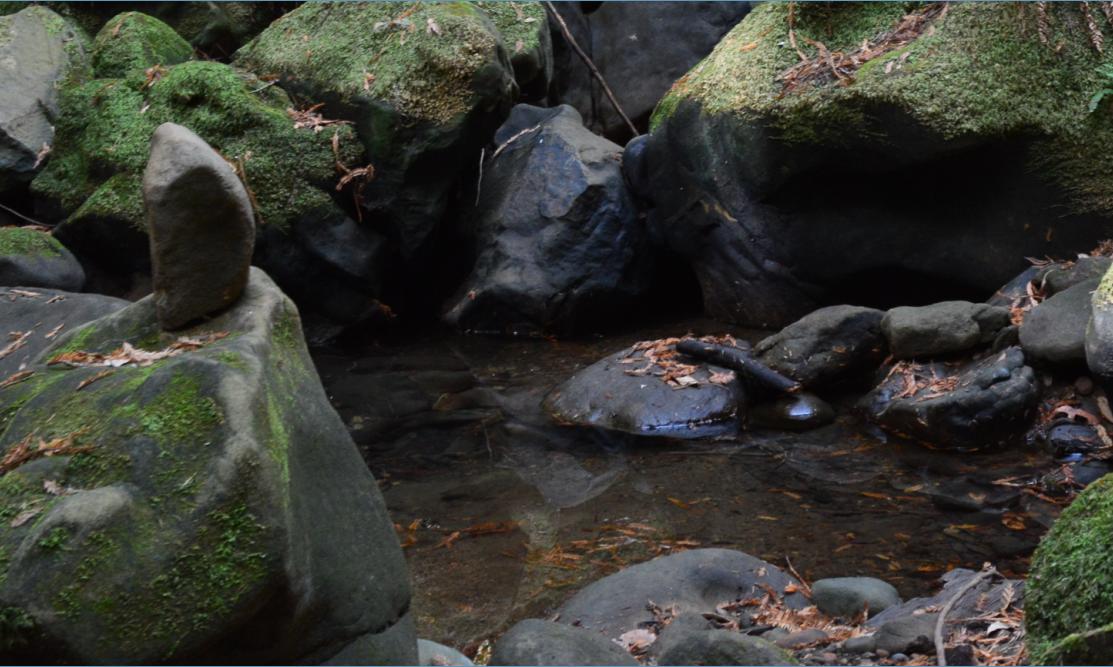 El Corte de Madera Creek Open Space Preserve19