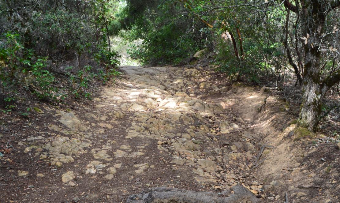 El Corte de Madera Creek Open Space Preserve28