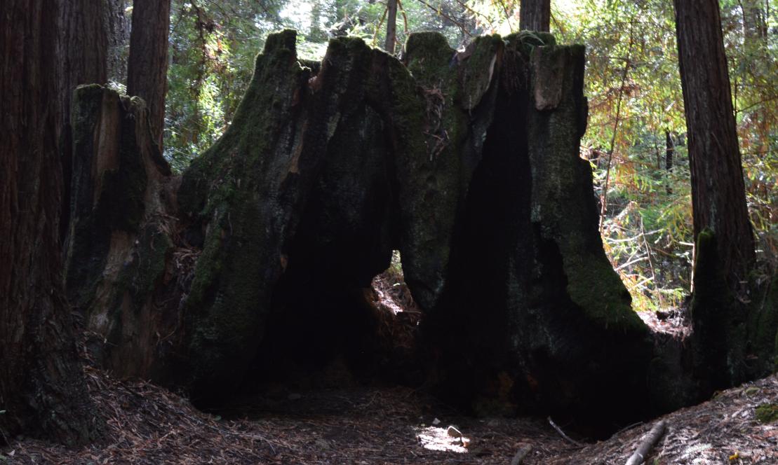 El Corte de Madera Creek Open Space Preserve7