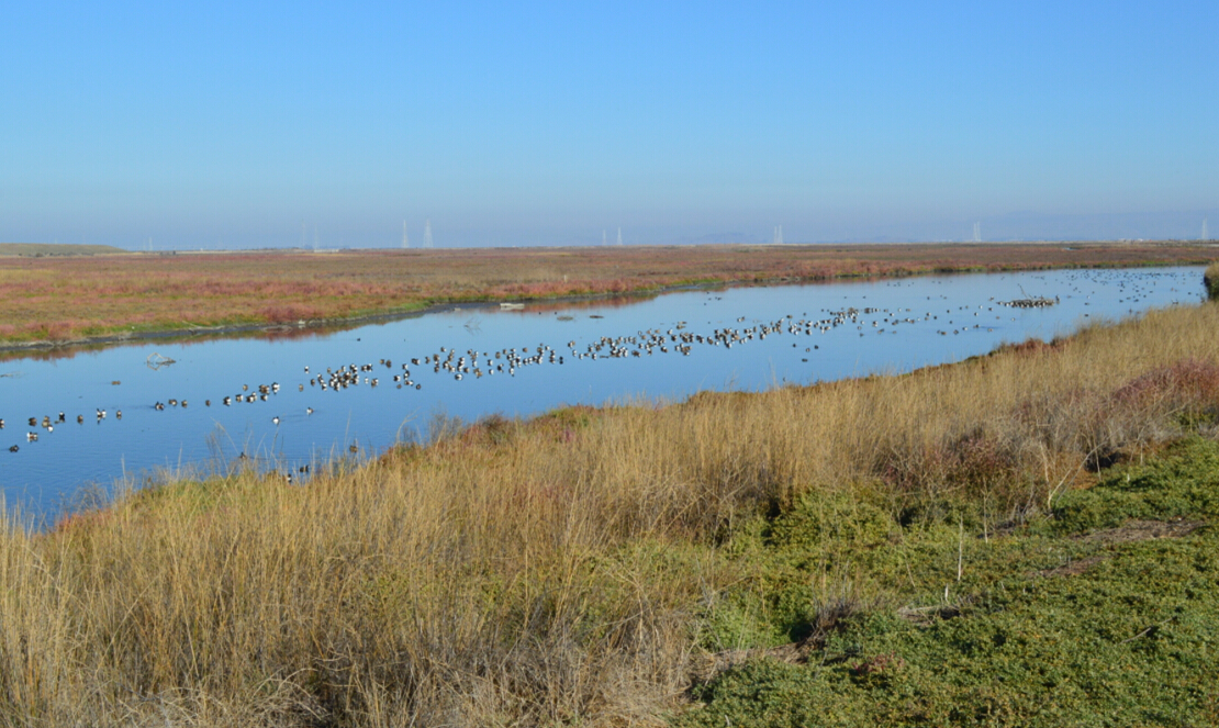 baylands nature preserve