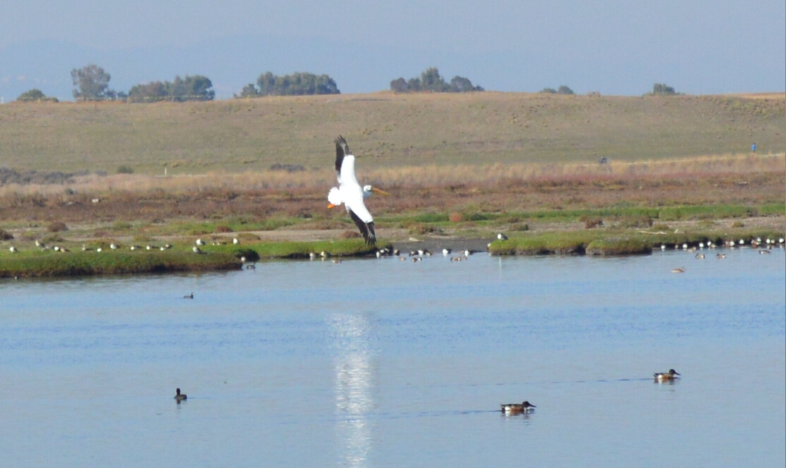 baylands nature preserve11