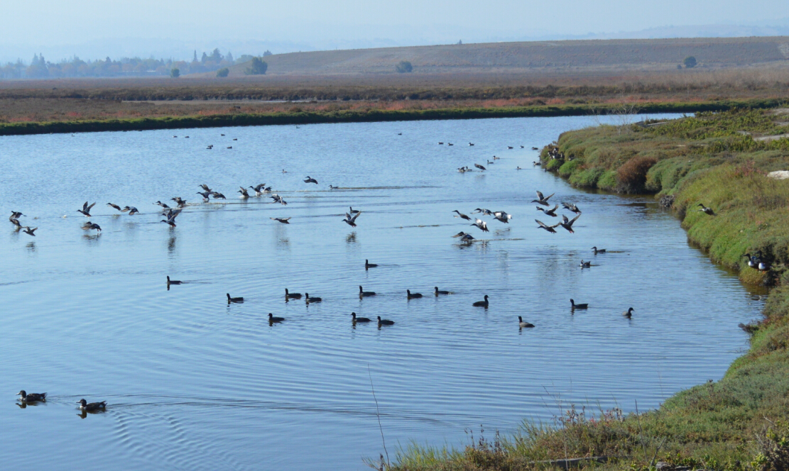 baylands nature preserve16