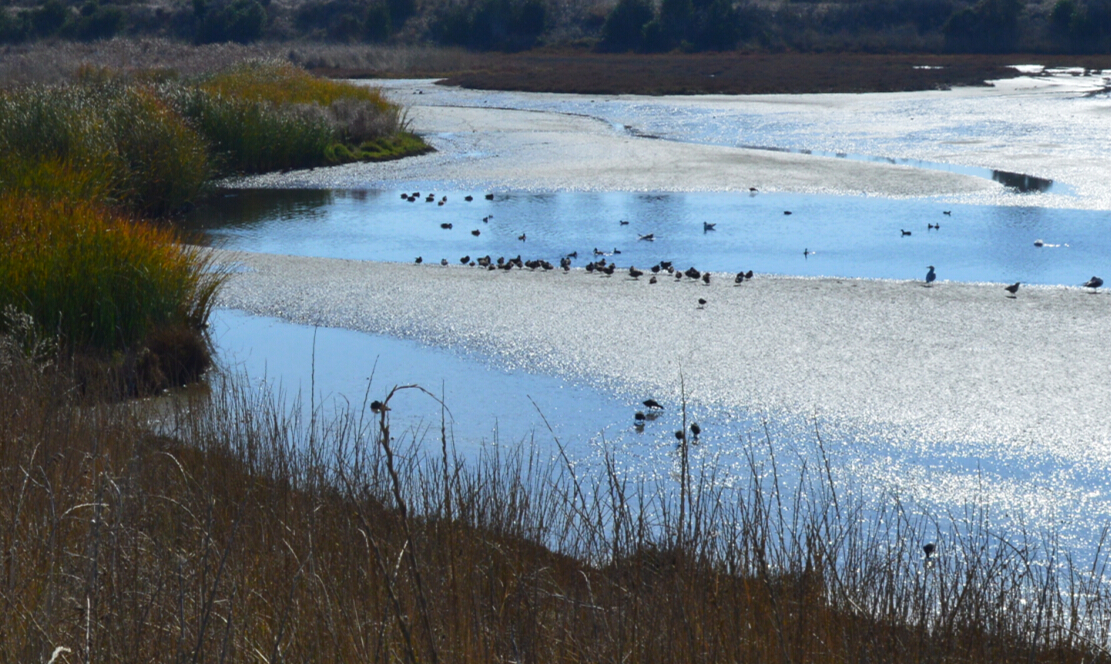 baylands nature preserve26