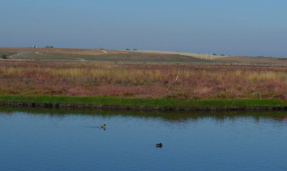 baylands nature preserve6