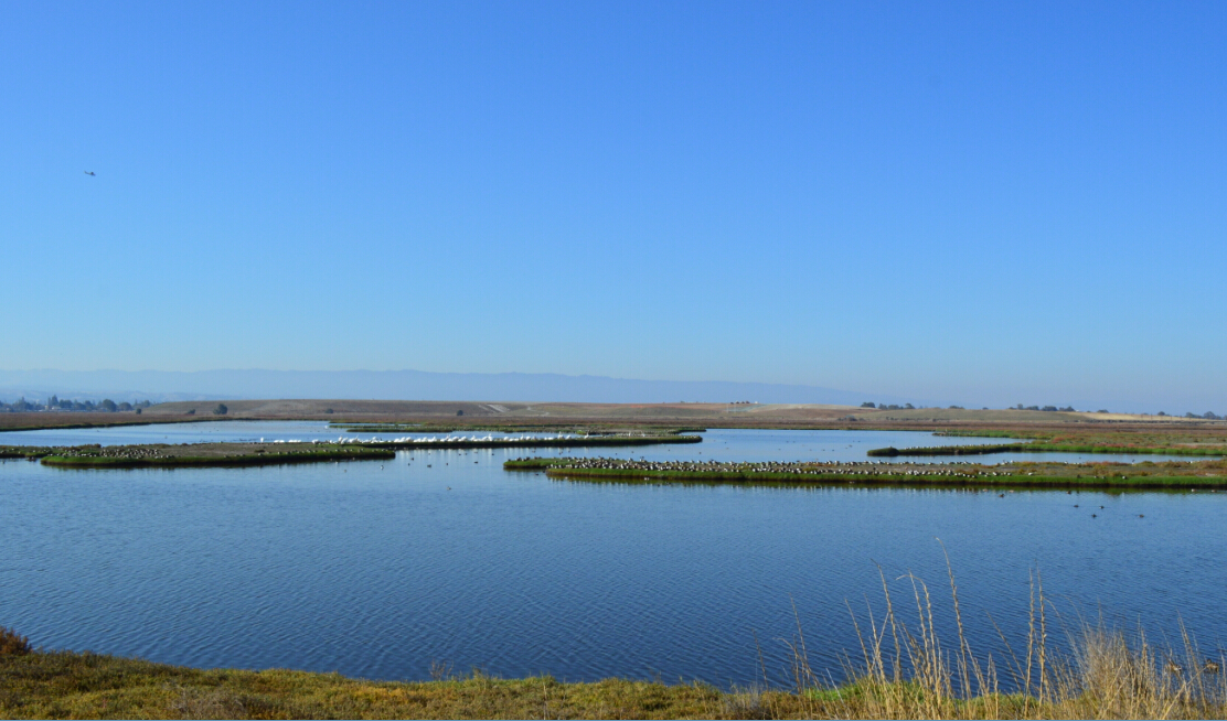 baylands nature preserve_1