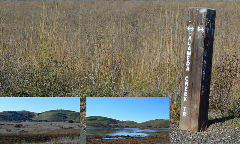coyote hills regional park12