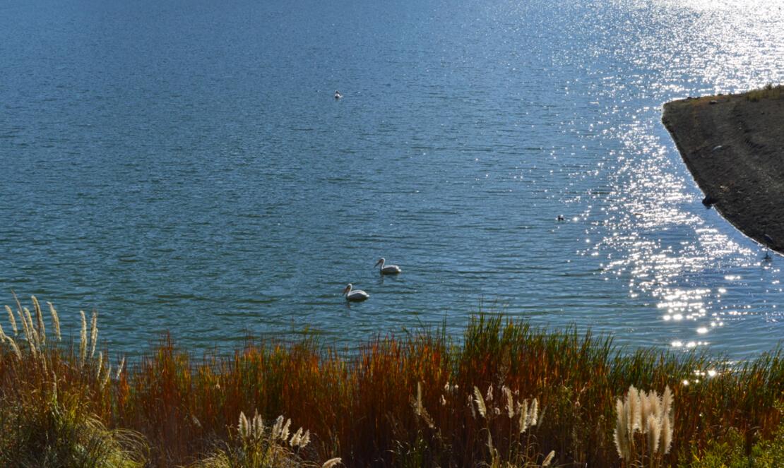 lake chabot regional park49