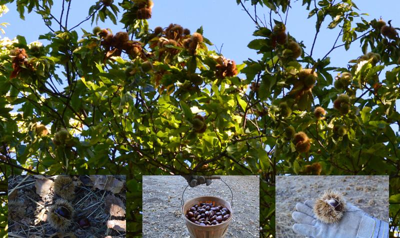 skyline ridge open space preserve_skyline chestnuts2