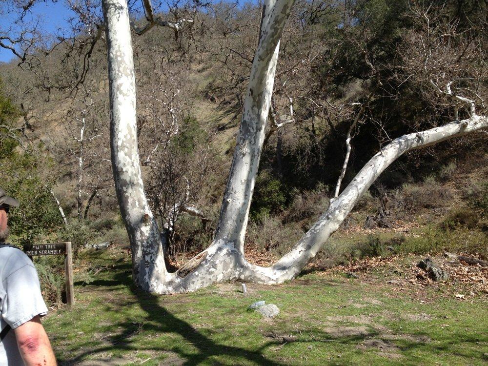 w tree