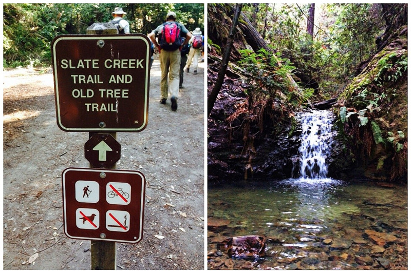 portola redwoods sp